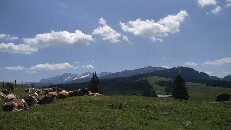 Winklmoosalm Aussicht Berge
